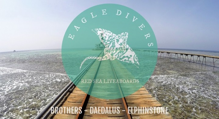 Brothers, Daedalus, Elphinstone Liveaboard - May 2020