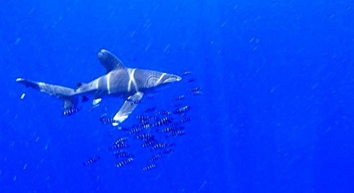Best time to see sharks in Egypt